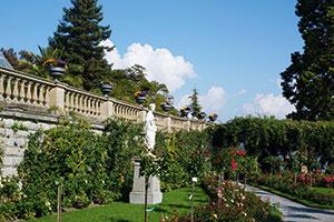 Der blühende Rosengarten auf der Insel Mainau am Bodensee
