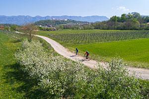 Radfahrer im slowenischen Vipava-Tal in den Alpen