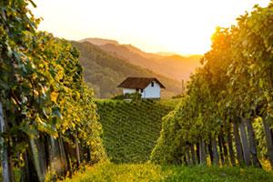 Weinberg mit kleinem Haus in der Slowenischen Steiermark
